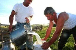 Laptele crud este nutritiv sau periculos ?